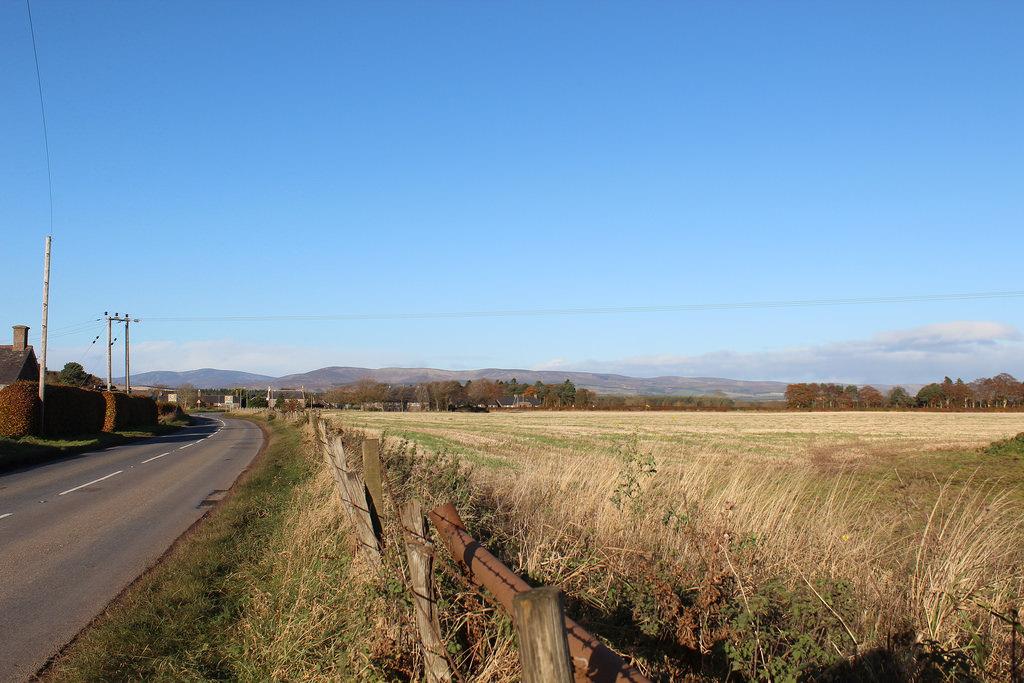 Rural Angus