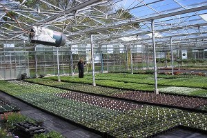 Ashbrook nursery green house - Angus leader