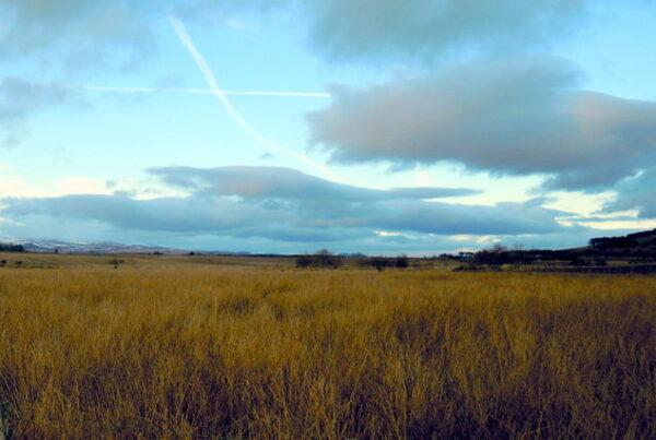 Angus countryside